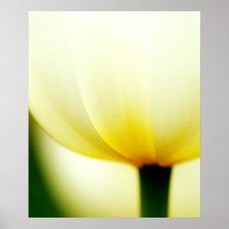 Solo poster hermoso del tulipán