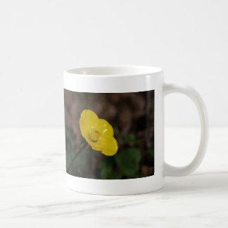 Solo ranúnculo amarillo tazas de café