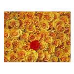 Solo rojo en rosas amarillos de la cama tarjetas postales