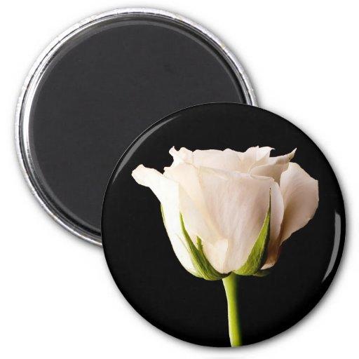 Solo rosa blanco en un fondo negro imán de nevera