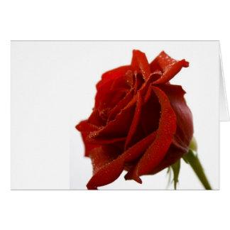 Solo rosa rojo con descensos de rocío tarjeta de felicitación