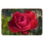 solo rosa rojo con rocío iman flexible