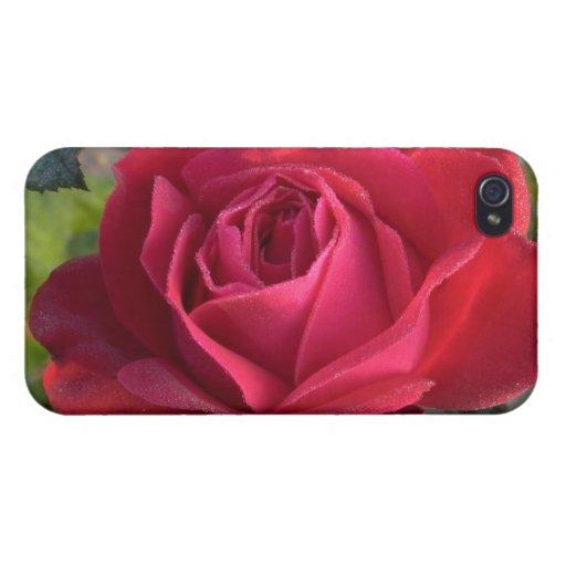 solo rosa rojo con rocío iPhone 4/4S carcasa