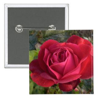 solo rosa rojo con rocío pin