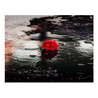Solo rosa rojo en la lluvia postales