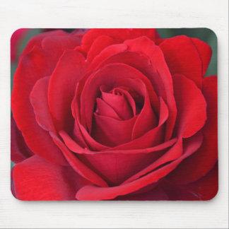 Solo rosa rojo en la plena floración alfombrilla de ratón