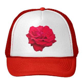 Solo rosa rojo gorra