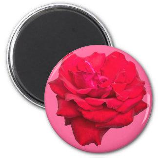 Solo rosa rojo imán redondo 5 cm