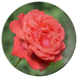Solo rosa rojo platos de cerámica