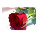 solo rosa rojo postales