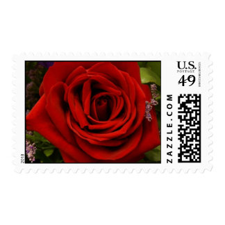 Solo rosa rojo