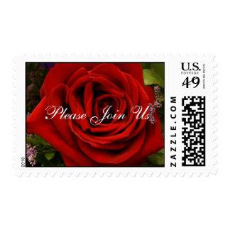 Solo rosa rojo - únase a por favor nos timbres postales