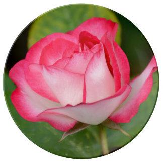 Solo rosa rosado y blanco platos de cerámica