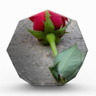 solo rose.jpg rojo