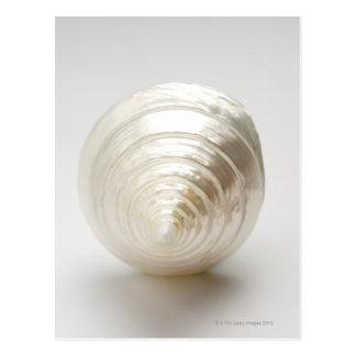 Solo seashell espiral postal