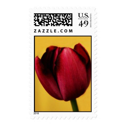 Solo sello del tulipán