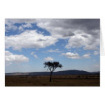 solo tree greeting card