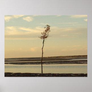 Solo Tree on Cape Cod Beach Picture Poster