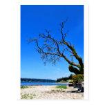 Solo Tree Post Card