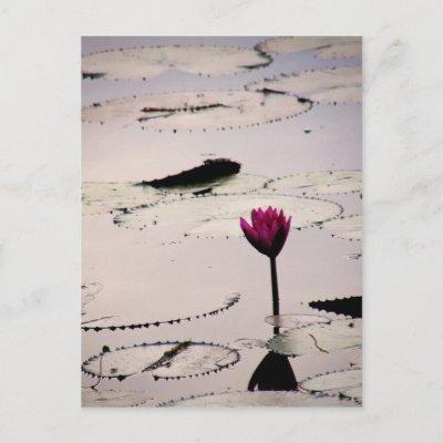 Solo-tus | Cambodia postcard
