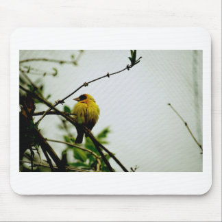 Solo Yellow Bird on Branch Mouse Pad