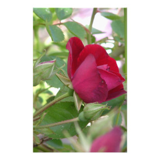 Solos efectos de escritorio del rosa rojo papelería