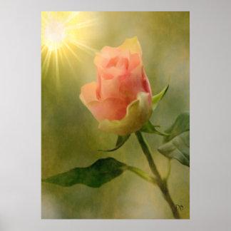 Solos posters color de rosa rosados póster