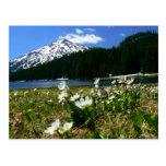 Soltero y Wildflowers 1 del Mt Postal