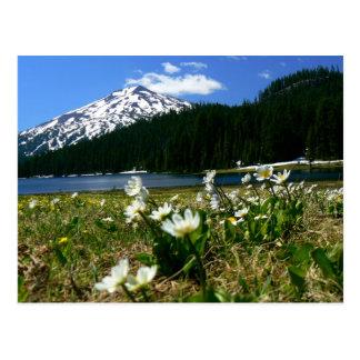 Soltero y Wildflowers 1 del Mt Tarjeta Postal