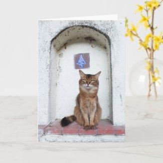 Somali Cat in Alcove Old World Scene Greeting Card