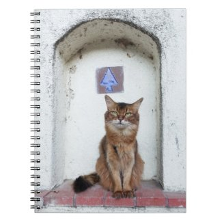 Somali Cat in Alcove Old World Scene Notebook