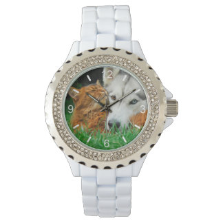 Somali Cat Siberian Husky Cute Friends Huddle Love Watch