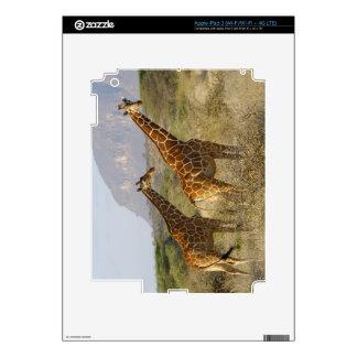 Somali Giraffe, Reticulated Giraffe, Giraffa iPad 3 Decal