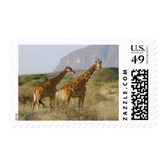 Somali Giraffe, Reticulated Giraffe, Giraffa Postage