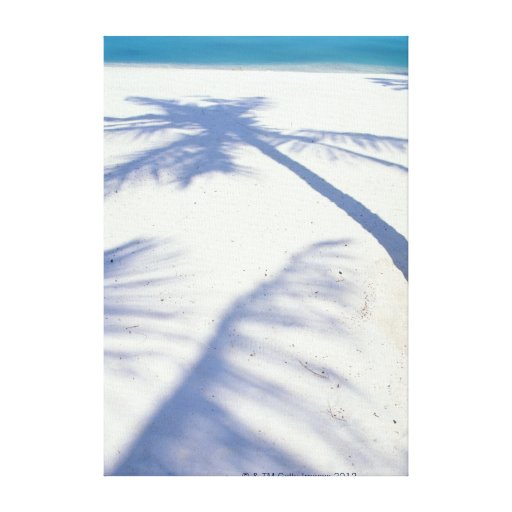 Sombra de la palmera 2 impresión en lona estirada