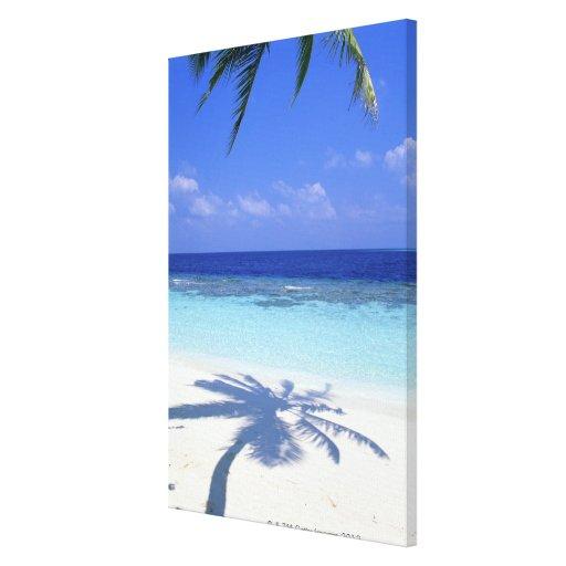 Sombra de la palmera impresión en lienzo estirada