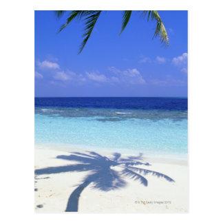 Sombra de la palmera postal