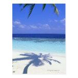 Sombra de la palmera tarjetas postales