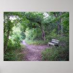 Sombra de la tarde en el bosque poster