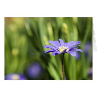 Sombras azules tarjeta de felicitación