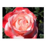 Sombras color de rosa postales