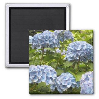 Sombras de Hydrangeas azules Iman De Nevera