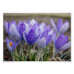 Sombras de la impresión fotográfica púrpura 7x5
