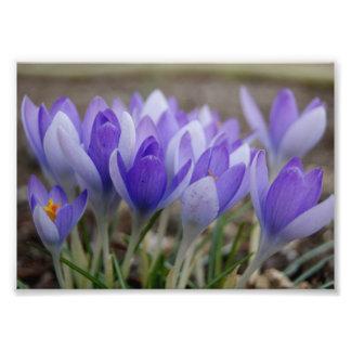 Sombras de la impresión fotográfica púrpura 7x5 fotografía