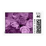 Sombras de rosas púrpuras envio