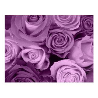 Sombras de rosas púrpuras postales