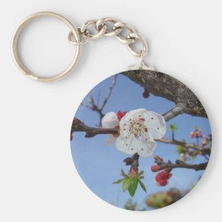 Sombras del albaricoque llavero redondo tipo pin