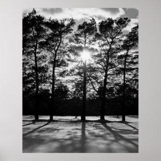 Sombras del árbol impresiones