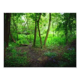 Sombras del goteo del verde impresiones fotograficas