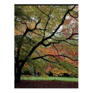 Sombras del otoño, arboreto de Westonbirt Postales